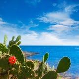 Majorca Cala Bona beach Son Servera Mallorca Royalty Free Stock Photo