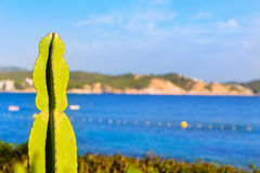 Majorca Cala Fornells beach Paguera Peguera. Calvia in Mallorca at Balearic island of Spain royalty free stock images