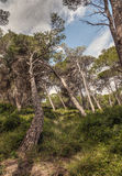 Majorca Countryside Royalty Free Stock Photos
