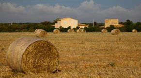 Majorcan agriculture Royalty Free Stock Image