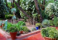 Majorelle庭院-红色道路和异乎寻常的植物 免版税库存图片