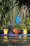 majorelle сада Стоковая Фотография RF