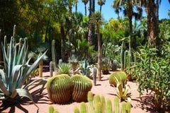Majorelle garden Stock Image