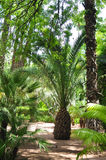 Majorelle garden Royalty Free Stock Photos