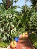 majorelle marrakech сада Стоковое Изображение