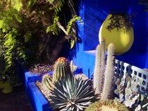 Majorelle trädgårdar i Marrakesh Arkivfoton