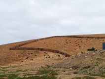 Majorero goats native to Fuerteventura in Spain Stock Photography