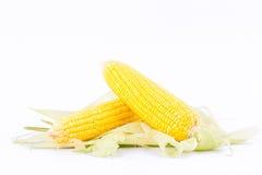 Majs på majskolvkärnor eller korn av mogen havre på vit bakgrund konserverar den isolerade grönsaken Royaltyfri Foto