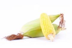 Majs på majskolvkärnor eller nya korn av mogen havre på vit bakgrund konserverar den isolerade grönsaken Royaltyfri Bild