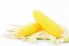 Majs på majskolvkärnor eller nya korn av mogen havre på vit bakgrund konserverar grönsaken Royaltyfria Foton