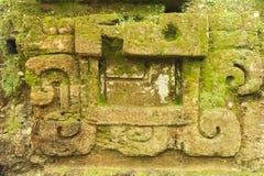 Majskie ruiny Tikal obrazy royalty free
