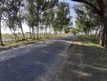 Дорога леса стоковое фото