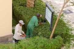 Makadi-bahía, Egipto, el 27 de julio de 2014 Dos jardineros que cortan arbustos Fotos de archivo