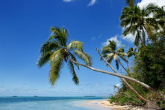 Makaha `岸在汤加塔布岛海岛附近的一个海岛在汤加 免版税库存图片