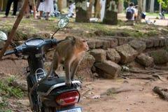 Makaken-Affe auf einem Bewegungsfahrrad lizenzfreie stockfotos