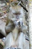 Makaken-Affe an Batu-Höhlen, Kuala Lumpur Stockfotos