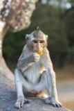 Makaken-Affe, der auf alten Ruinen von Angkor, Kambodscha sitzt Stockfoto