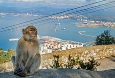 Makaken-Affe in Gibraltar Stockfoto