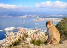 Makaken-Affe in Gibraltar Lizenzfreie Stockbilder