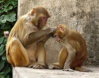 Makaken-Affen Stockfotografie
