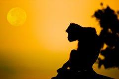 Makaken Affen Krabbe-essend, sehen Sie Mond Lizenzfreie Stockfotografie