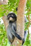 Makaken auf einem Baum Lizenzfreie Stockfotografie