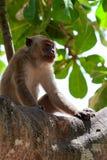 Makaken auf einem Baum Stockbilder