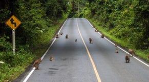 Makaken auf einer Straße Stockfotos