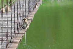 Makaken, der auf der alten Hängebrücke mit grüner Natur b sitzt Lizenzfreie Stockfotografie