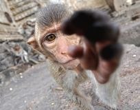 Makaken in einem Tempel, Thailand Lizenzfreies Stockbild