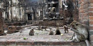 Makaken in einem Tempel, Thailand Stockfotografie