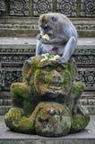 Makaken im hindischen Tempel im Affe-Wald, Ubud, Bali Lizenzfreies Stockfoto