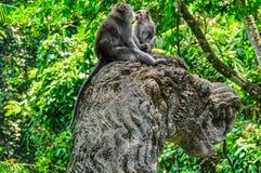 Makaken im hindischen Tempel im Affe-Wald, Ubud, Bali Stockfotografie