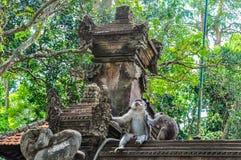 Makaken im hindischen Tempel im Affe-Wald, Ubud, Bali Stockfoto