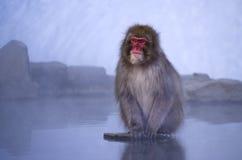 Makaken-Schnee-Affe bis zum heißer Quelle Lizenzfreies Stockfoto