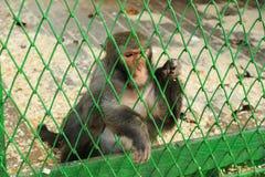 Makaken sind in einem Käfig Stockfotografie