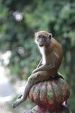 Makaken sitzt auf Treppe Lizenzfreies Stockbild