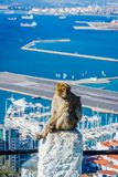 Makakenaffe über Gibraltar-Stadt Stockbild