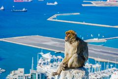 Makakenaffe über Gibraltar-Stadt Stockbilder