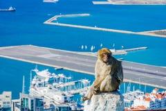 Makakenaffe über Gibraltar-Stadt Lizenzfreie Stockbilder