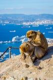 Makakenaffe über Gibraltar-Stadt Lizenzfreie Stockfotos