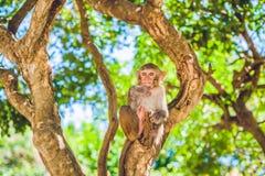 Makakenaffe, der auf dem Baum sitzt Peildeck, Vietnam Stockfotografie