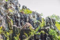 Makakenaffe, der auf Felsen springt Peildeck, Vietnam Lizenzfreie Stockfotos
