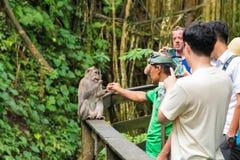Makakenaffe am heiligen Affe-Wald Ubud, Bali Lizenzfreies Stockfoto