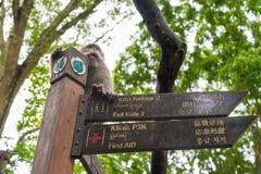 Makakenaffe am heiligen Affe-Wald Ubud, Bali Stockfotos