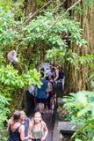 Makakenaffe am heiligen Affe-Wald Ubud, Bali Stockfoto