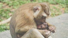 Makakenaffe mit Baby im Arm Stockfotos