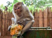 Makakenaffe und eine Mahlzeit vom Abfall, Krabi, Thailand lizenzfreie stockfotografie