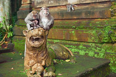 Makakenaffefamilie mit Baby im Schongebietwald Stockbild