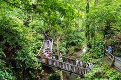 Makakenaffen am heiligen Affe-Wald Ubud, Bali Stockbild